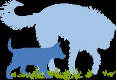Tierkommunikation - Gespräche, Seminare, Jahres- Ausbildung
